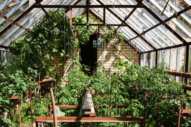 what to plant in a greenhouse in summer