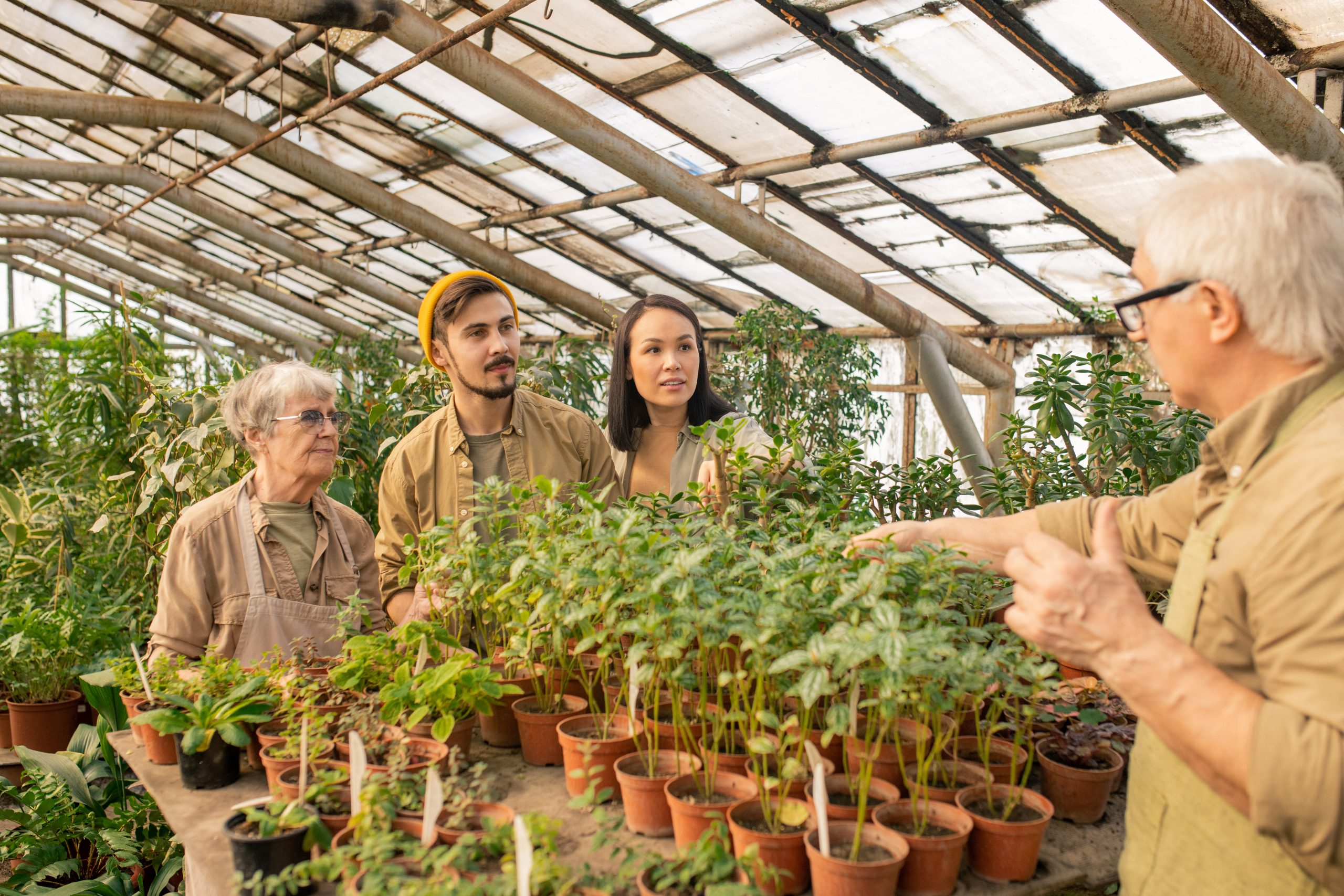 what is a green house and what can you grow in a greenhouse